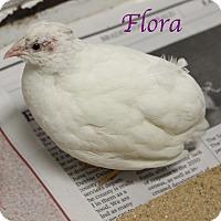 Adopt A Pet :: Flora - Bradenton, FL