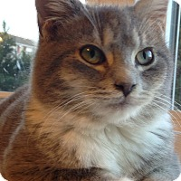 Adopt A Pet :: Lincoln - Millersville, MD