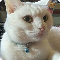 Adopt A Pet :: Ohana - San Bernardino, CA