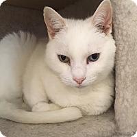 Adopt A Pet :: Tiffany - Cashiers, NC