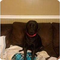 Adopt A Pet :: Cooper - Murfreesboro, TN