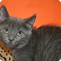 Adopt A Pet :: MERCEDES - SILVER SPRING, MD
