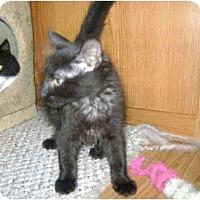 Adopt A Pet :: Salem - Colmar, PA