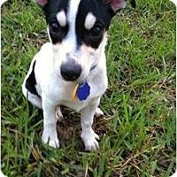 Adopt A Pet :: Ollivia - Harrah, OK