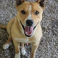 Adopt A Pet :: Colby - Yukon, OK