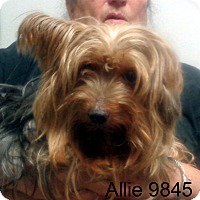 Adopt A Pet :: Allie - baltimore, MD