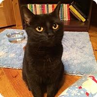 Adopt A Pet :: Proud Mary - McDonough, GA