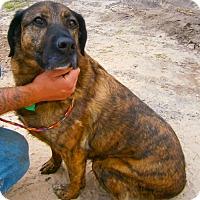 Adopt A Pet :: Jersey - Cheboygan, MI