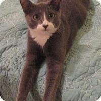 Adopt A Pet :: TOESY - NY, NY