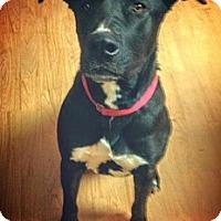 Adopt A Pet :: Luke - Sonora, CA