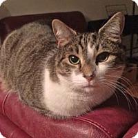 Adopt A Pet :: Sebastian - Merrifield, VA