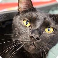 Adopt A Pet :: Valentino - Sarasota, FL