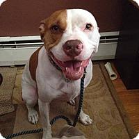 Adopt A Pet :: Rosie - Acushnet, MA