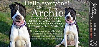 Great Dane Mix Dog for adoption in Saginaw, Michigan - Archie