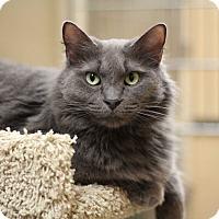 Adopt A Pet :: Kim - Richmond, VA