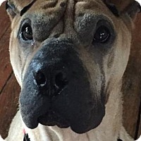 Adopt A Pet :: Rocky - Barnegat Light, NJ