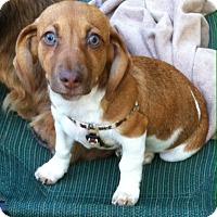 Adopt A Pet :: Reese - Memphis, TN