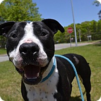 Adopt A Pet :: King - Brookhaven, NY