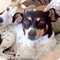 Adopt A Pet :: Layla (FL) - Gainesville, FL