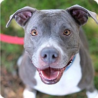 Adopt A Pet :: Lexi - Santa Monica, CA