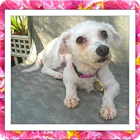 Adopt A Pet :: Pending!! Fossie - IL - Tulsa, OK