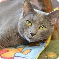 Adopt A Pet :: Earl Grey	151934 - Atlanta, GA
