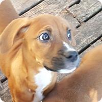 Adopt A Pet :: Brynn - ADOPTED!! - Antioch, IL