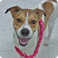 Adopt A Pet :: Reign - Chambersburg, PA