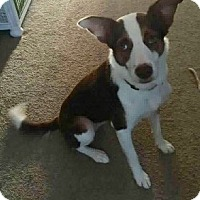 Border Collie Mix Dog for adoption in Oliver Springs, Tennessee - Nessa