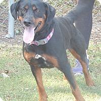 Adopt A Pet :: Layla - Newport, NC