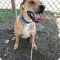 Adopt A Pet :: Royal - Colonial Heights animal shelter, VA