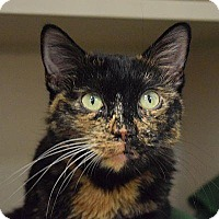 Adopt A Pet :: Vivien - Denver, CO