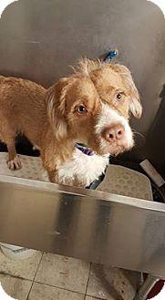 Terrier (Unknown Type, Medium) Mix Dog for adoption in Whitehall, Pennsylvania - Charlie