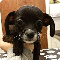 Adopt A Pet :: Jasmin - Tijeras, NM