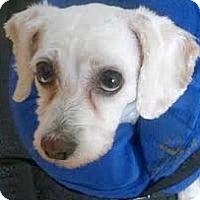 Adopt A Pet :: Sebastian-Adoption Pending - Boulder, CO
