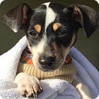 Adopt A Pet :: June - Santa Cruz, CA