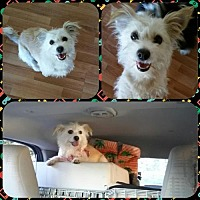 Adopt A Pet :: Arleta - Lancaster, CA