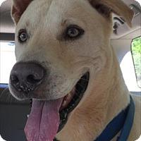 Adopt A Pet :: OscarLee - Alpharetta, GA