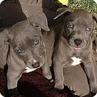 Adopt A Pet :: Santa - Scottsdale, AZ