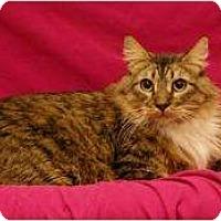 Adopt A Pet :: Q-Tip - Sacramento, CA