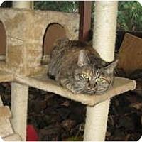 Adopt A Pet :: CARLA - Clay, NY