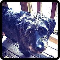 Adopt A Pet :: Harry - Lyme, CT