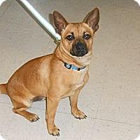Adopt A Pet :: Banjo - Lockhart, TX