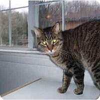 Adopt A Pet :: No Collar - Hamburg, NY