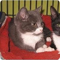 Adopt A Pet :: Travina - Colmar, PA