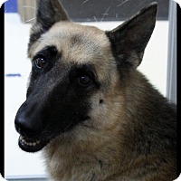 Adopt A Pet :: Xena - Rockwall, TX