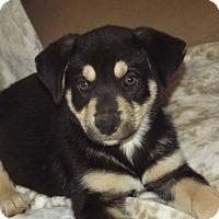 Adopt A Pet :: Pango - Phoenix, AZ