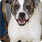 Adopt A Pet :: Harley (is a smiler)