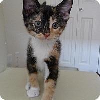 Adopt A Pet :: Kuala - Edmonton, AB
