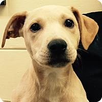 Adopt A Pet :: Angel#7F - Orlando, FL